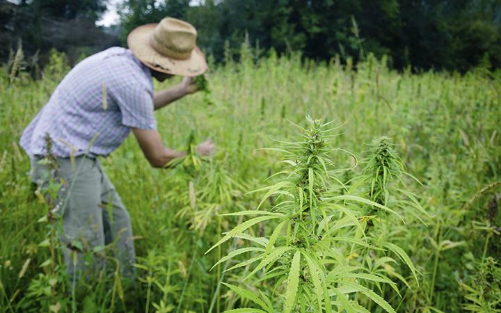 大麻業界の流れを変えた5人の大麻栽培者
