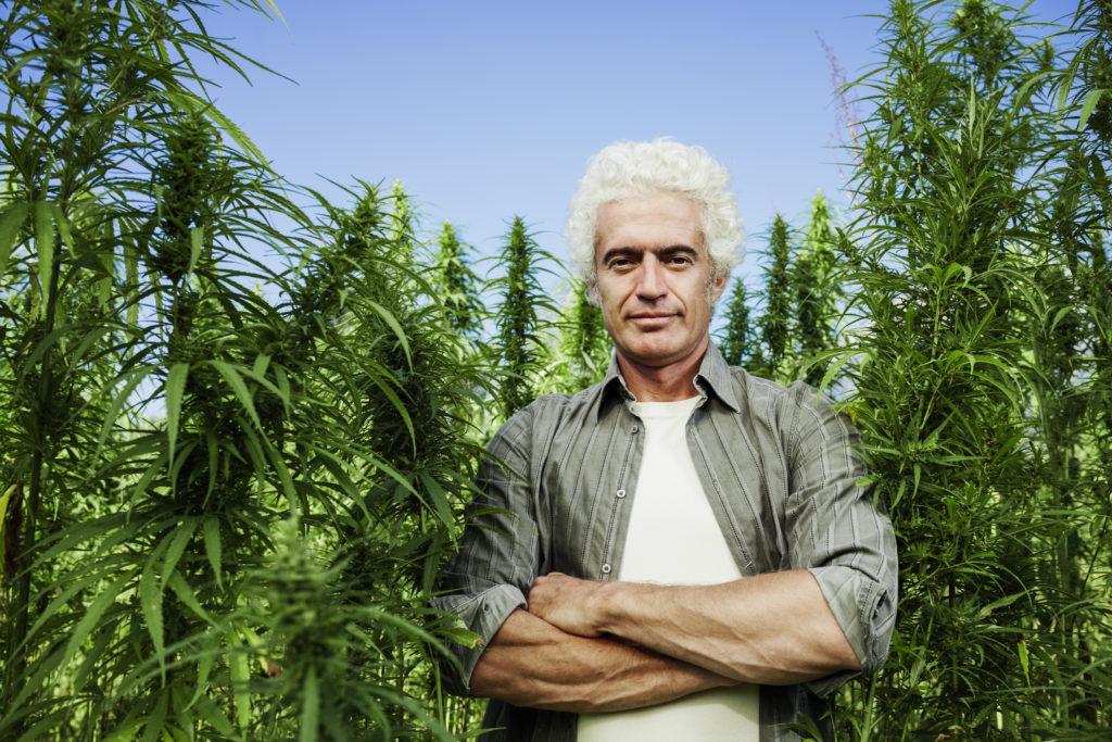 南オレゴン州の収穫期の大麻農家の作業と重要ポイントとは