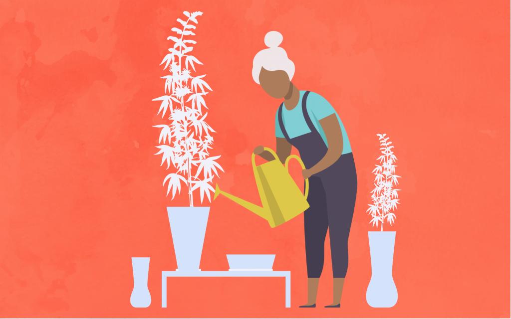 予算別で見る、大麻(マリファナ)屋内栽培用テントの作り方